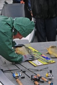 Man measuring fish for a tournament.