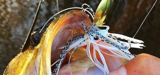 Bassman Spinnerbaits – AYC Fishing